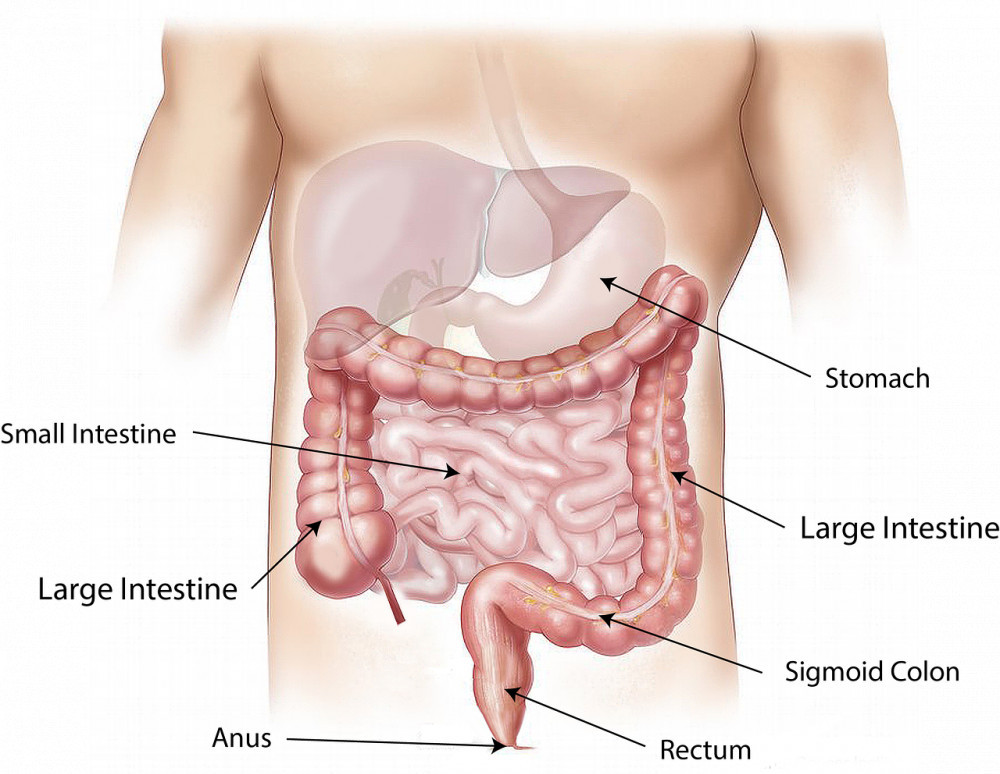 What is the Colon